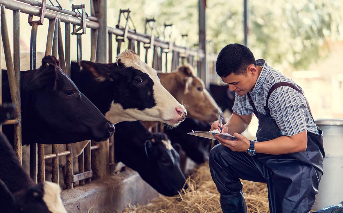 Milchviehbetrieb in Niedersachsen kaufen