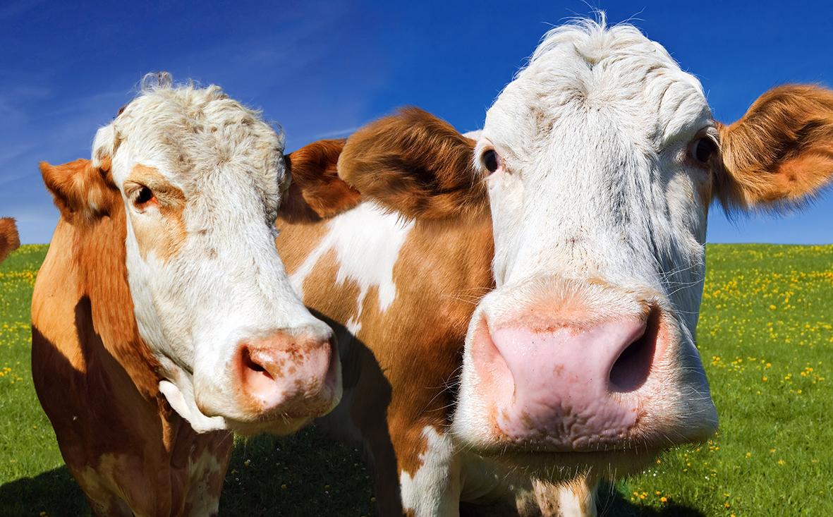 Milchviehbetrieb in Rheinland-Pfalz kaufen
