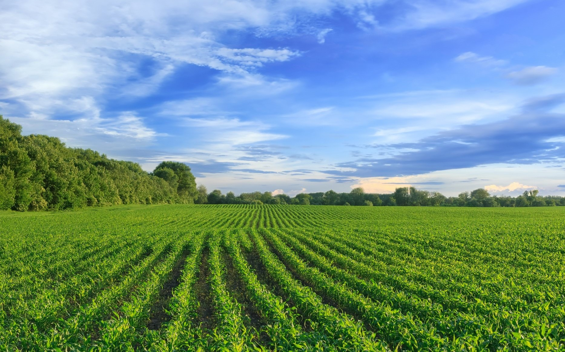 11123 landwirtschaftliche Fläche im Kreis Minden-Lübbecke