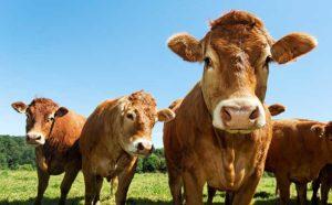 Milchviehanlage in den neuen BL kaufen